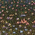 Wildflowers by James W Johnson