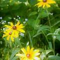 Wildflowers by Lori  Burke