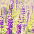 Wildflowers by Mariusz Blach