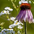 Wildflowers by Michael Cummings