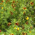 Wildflowers Nine by Stephen Anderson