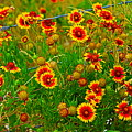 Wildflowers On The Barb by Jeanie Mann