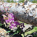 Wildflowers On The Fence by Weathered Wood