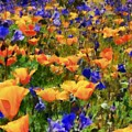 Wildflowers by Russ Harris