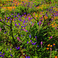 Wildflowerscape by Greg Clure