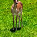 Wildlife 2 by Ingrid Glover