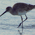Willet In The Surf by D Hackett