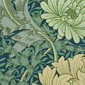 William Morris Wallpaper Sample With Chrysanthemum by William Morris