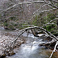 Williams River In Winter by Thomas R Fletcher
