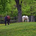 Williamsburg Farm by Richard Jenkins
