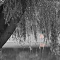 Willow Deer II by Dylan Punke