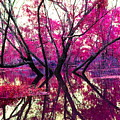 Willow Pink by Gina Welch