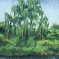 Willow Tree by Dolores Holt