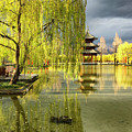 Willow Tree In Liiang China II by Linda Brody