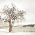 Willow Tree In Winter by Tara Turner