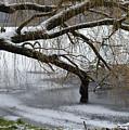 Willow Tree On The Frozen Lake Detail by Dejan Antanaskovic