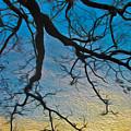 Willowbrush by Mykel Davis