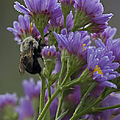 Willowwood Bee by Robert Pilkington
