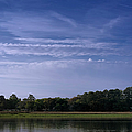 Wilmington River Savannah Morning by Joan Carroll