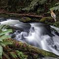 Wilson Creek #18 With Added Cedar Waxwing by Ben Upham III