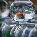 Win A Goldfish by Joann Long