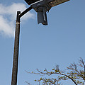 Wind And Solar Powered Light by Ted Kinsman