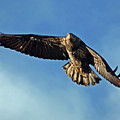 Wind Beneath My Wings by Randall Ingalls