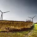 Wind Driven by William Norton