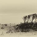 Wind Grown Beach Trees by Ann Keisling