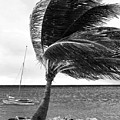 Wind by John Rizzuto