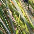 Wind Tossed - by Julie Weber