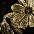 Windblown by Bonnie Bruno