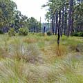 Windblown Grass by Kenneth Albin