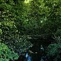 Winding Creek by Amanda Kessel