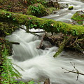 Winding Creek With A Mossy Log by Jeff Swan