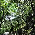 Winding Road Santa Ynez Mountains by Kyle Hanson