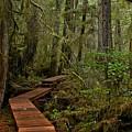 Winding Through The Willowbrae Rainforest by Adam Jewell