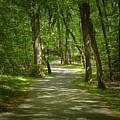 Winding Trails At Bur Mil Park  by Matt Taylor