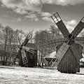 Windmills by Gabriela Insuratelu