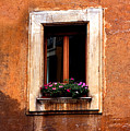 Window And Flowers Rome  by Xavier Cardell