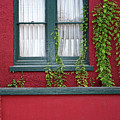 Window And Vines by Christopher Holmes