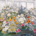 Window Box In The Sun by Lois Mountz