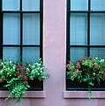 Window Boxes by Ronnie Glover