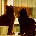 Window Cats by Katherine Nutt