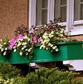 Window Flower Box by Sophia Tallant