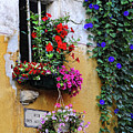 Window Garden In Arles France by Dave Mills