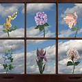 Window Garden by Mitch Spence