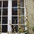 Window In Telgte by Chani Demuijlder