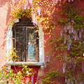 Window In Venice With Wisteria by Michael Henderson