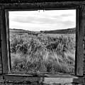 Window Memories by Lindy Pollard